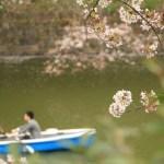 千鳥ヶ淵の桜時期のボート待ち時間は?予約は?混雑状況確認方法は?