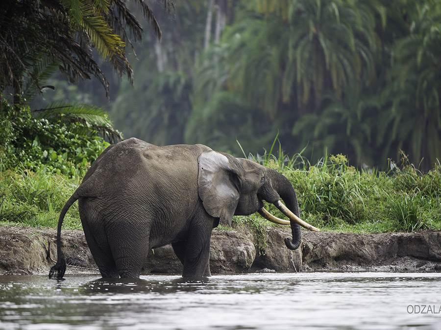 Lango Camp  Luxury Rep of Congo Safaris  Mirus Journeys