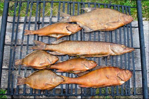 какую рыбу можно взять для горячего копчения