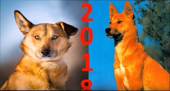 Чего нам ждать от Желтой Земляной Собаки