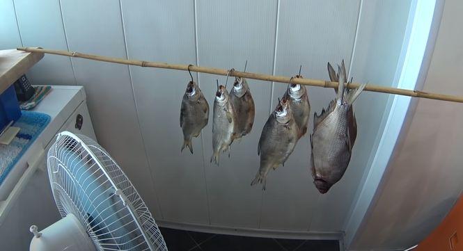 Мелкую рыбу вялят на сетках