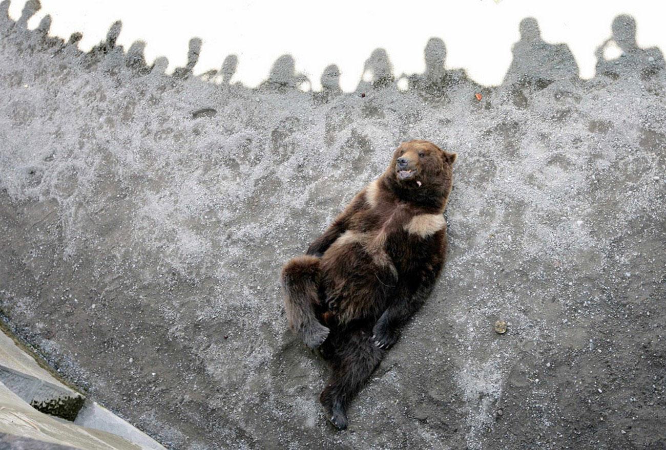 Izlasci medvjeda i mladunaca