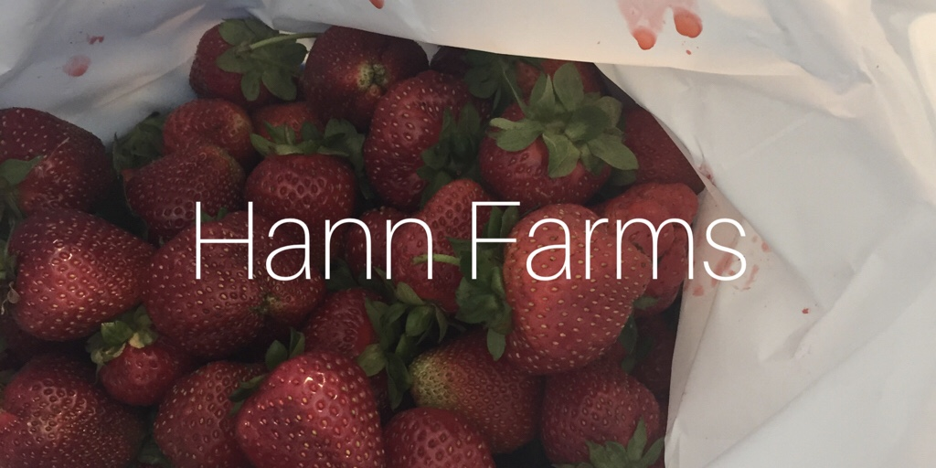 Hann Farms Strawberry Picking