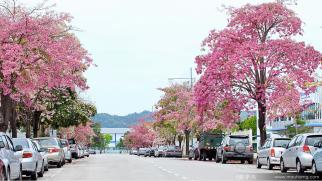 penang-sakura-street-malaysia