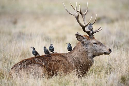 La Simbiosis En Los Animales Mis Animales