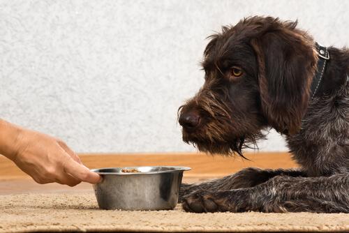 Pienso para la dieta de los perros