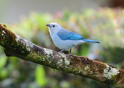 Descubre Panam y sus 5 especies de pjaros ms comunes