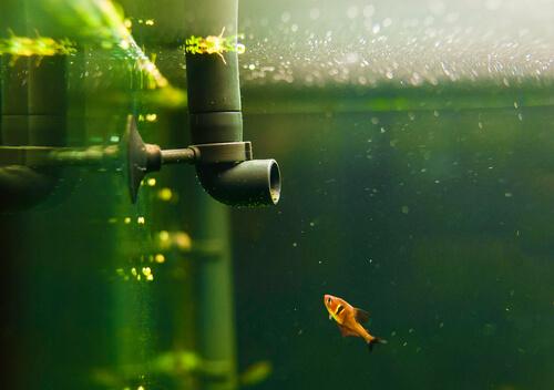 4 tipos de filtros ideales para el acuario  Mis animales