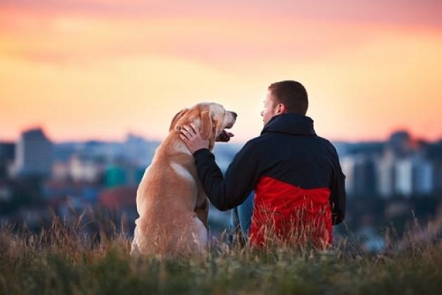 Resultado de imagen para perros fieles