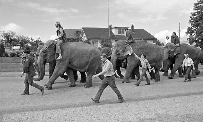 Barnum and Bailey elephant walk