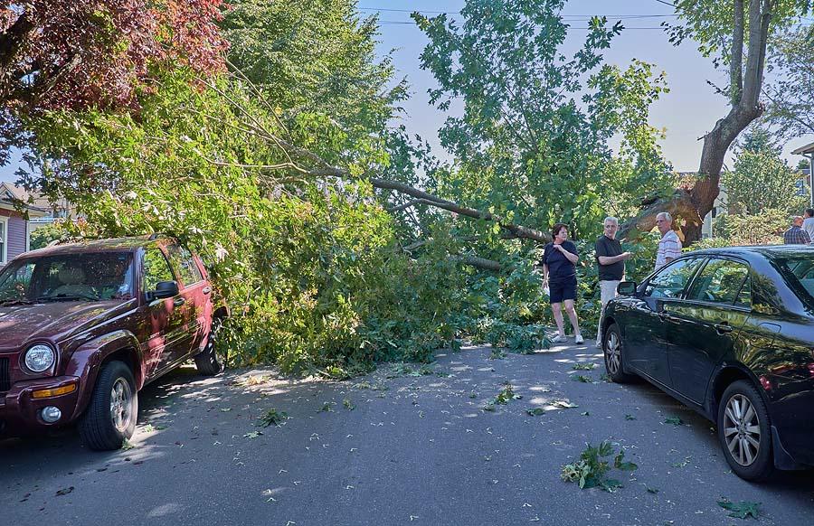 Tree down in Kitsilano