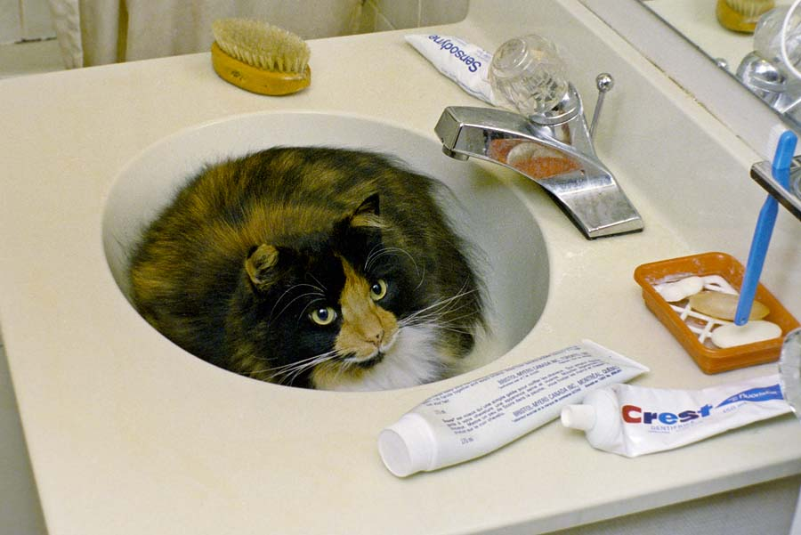 Gladys in the sink