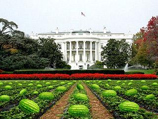 watermelon_patch