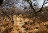Trail, Waterberg