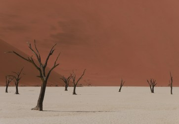 Tree and Dunes, Deadvlei