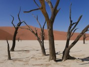 Trees, Deadvlei