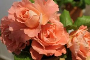 Rosas para el día de los enamorados
