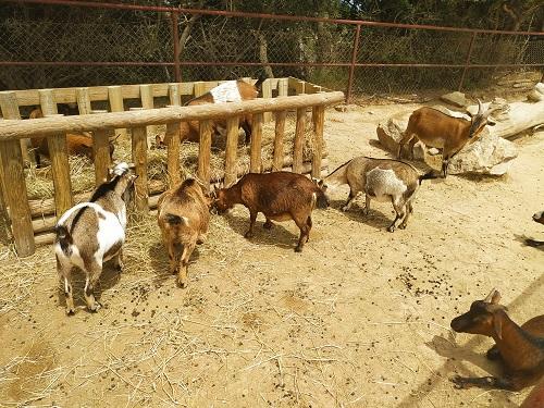 Cabritas, zona infantil del zoológico