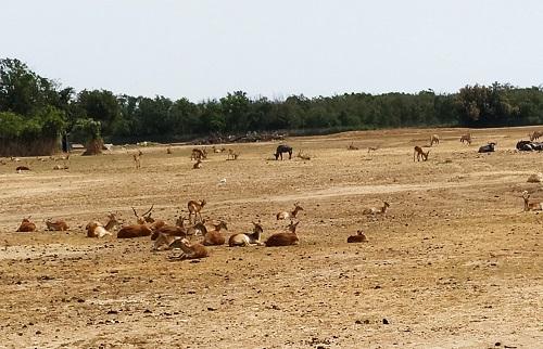 Llanura africana, Sigean