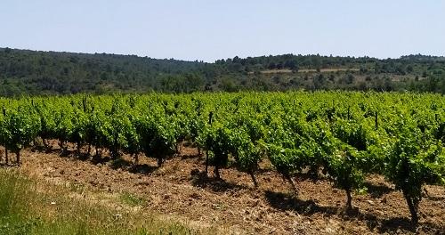 Vistas de la carretera hacía Lagrasse, viñedos