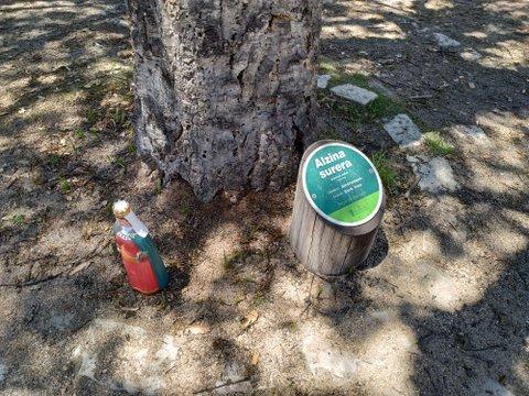 Cartel informativo de árbol
