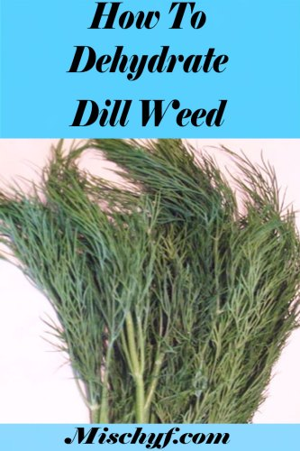 How to dry dill weed