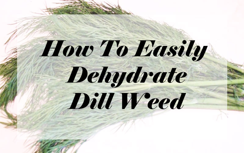 How To Dehydrate Fresh Dill Herb