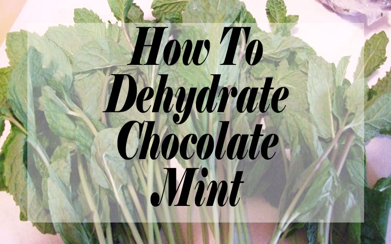 How To Dehydrate Chocolate Mint