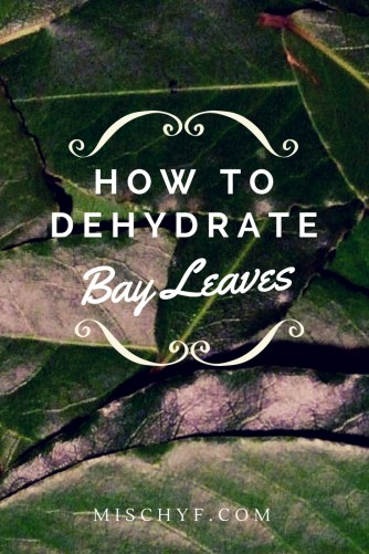 How dry fresh bay leaves to use in recipes.