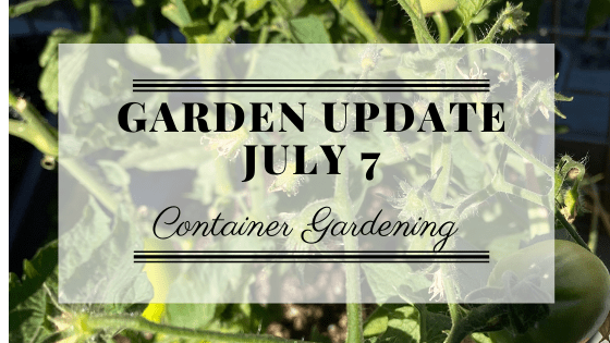 Garden Update for July 7th