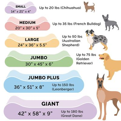 Dog Bed Sizes from Small to Giant