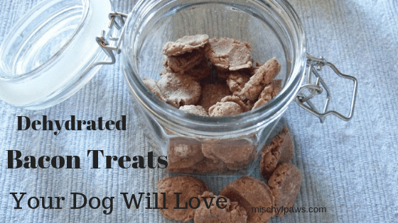 Doggie bacon treats