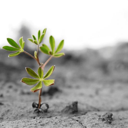 Planta brota em terra seca