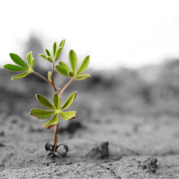 Descubra as maravilhas que a Virtude da Esperança faz na sua vida