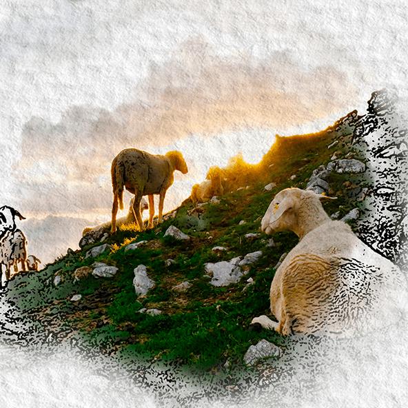 Ovelhas no pasto