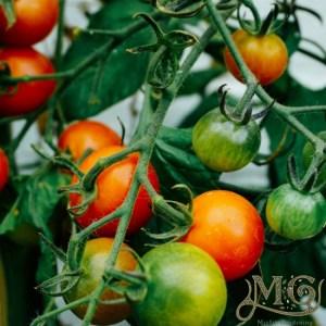 Blue Zone Diät Lebensmittel zu wachsen