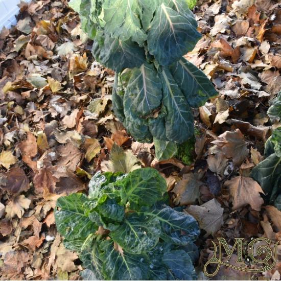 wie man den Boden für die Gartenarbeit verbessert