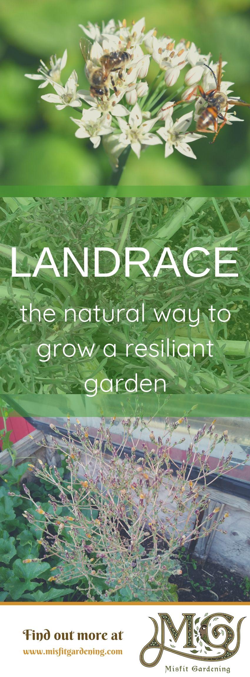 Erfahren Sie, wie ein Landgarten zu Ihnen passt. Klicken Sie hier, um mehr über Landrassengärten zu erfahren, oder stecken Sie es an und speichern Sie es für später. #gardening #nongmo #homestead