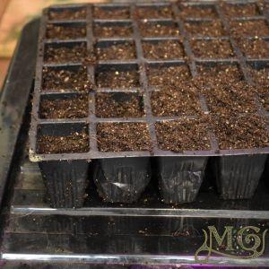 Anleitung zum Starten von Samen in Innenräumen