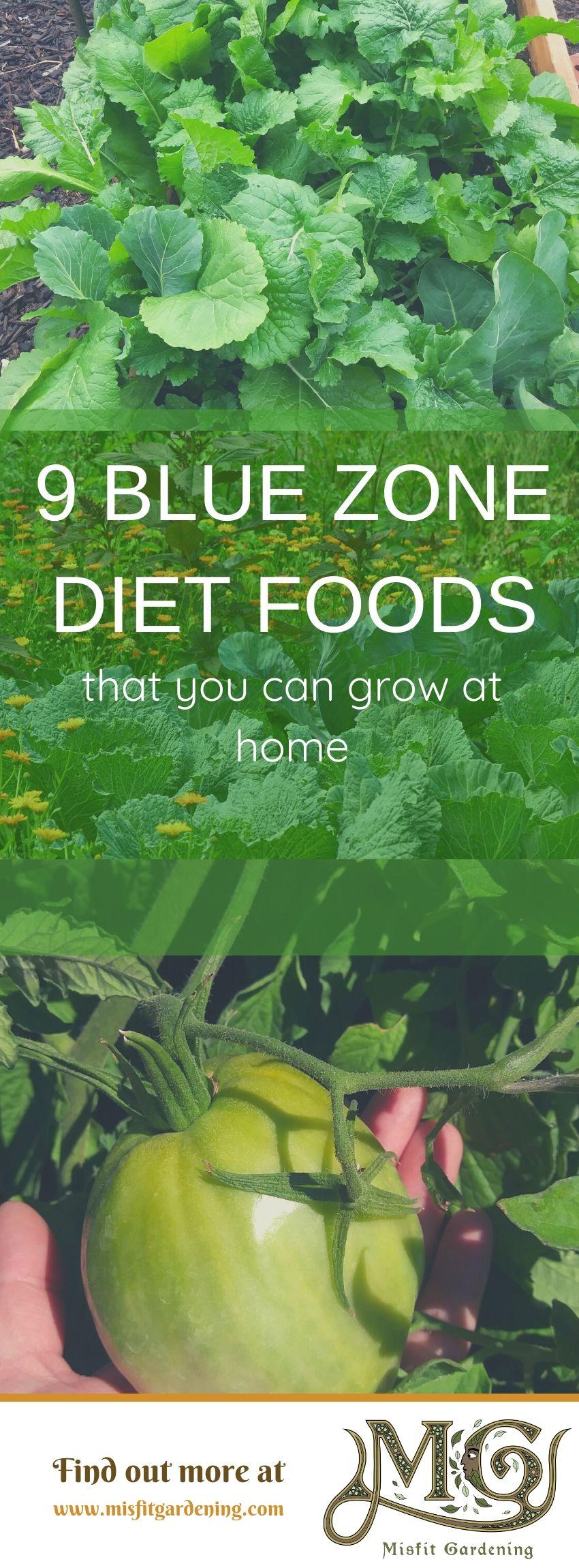 Klicken Sie hier, um mehr über Blue-Zone-Diätnahrungsmittel zu erfahren, die Sie zu Hause anbauen oder anheften und für später aufbewahren können. #Homesteading #Garten