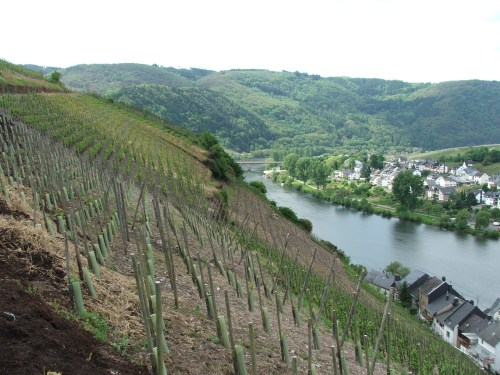 080110_zell_mosel