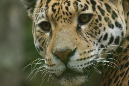 Mother Jaguar - Misha Almira