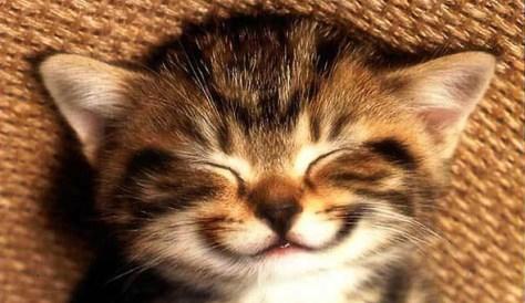 7 Highly Effective Happiness Hacks- MishaAlmira.com