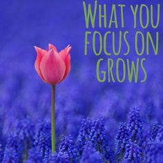 What You Focus On Grows- Misha Almira