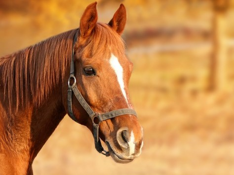 Top 3 Ways CBD Oil Can Benefit Horses- MishaAlmira.com