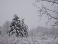 March 23rd 2011 ice storm 009