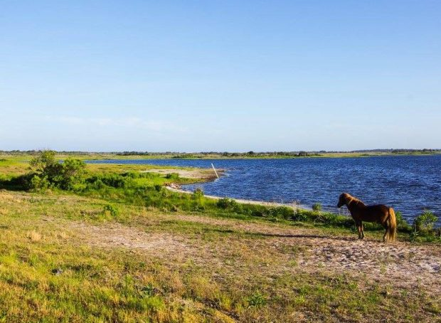 Visit Assateague Island on a day trip from Baltimore