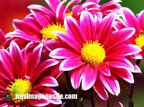 Imgenes de flores bonitas  Imgenes
