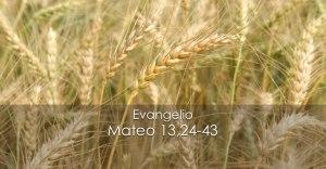 Mateo 13,24-43