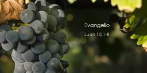 Juan-15,1-8